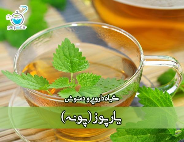 گیاه دارویی و دمنوش یارپوز (پونه کوهی)